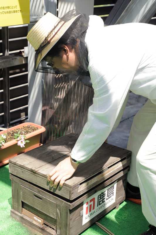 Yamada opens a hive containing 10,000 bees