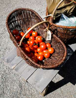 Tomatoes at Rosendal