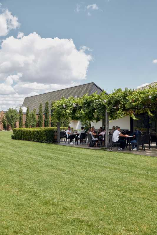 Diners enjoy lunch beneath grape vines